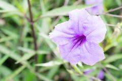 Belle fleur pourprée Photo libre de droits