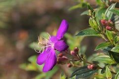 Belle fleur pourprée Photographie stock libre de droits