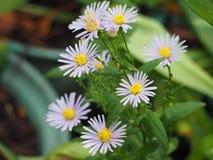 Belle fleur pourpre Photographie stock