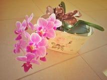 Belle fleur pourpre d'orchidée Images libres de droits