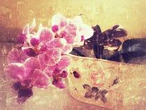 Belle fleur pourpre d'orchidée Image stock