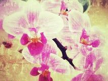 Belle fleur pourpre d'orchidée Photographie stock