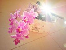 Belle fleur pourpre d'orchidée Images stock
