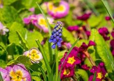 Belle fleur pourpre en soleil photos libres de droits