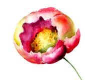 Belle fleur rose Photo stock