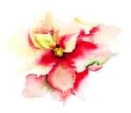 Belle fleur rose Photographie stock libre de droits