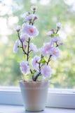 Belle fleur rose dans la fenêtre Images stock
