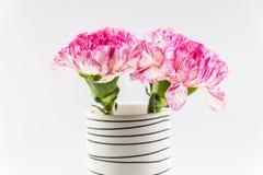 Belle fleur rose dans le vase noir et blanc sur le backgrou blanc Image stock