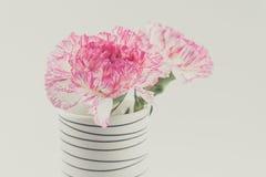 Belle fleur rose dans le vase noir et blanc sur le backgrou blanc Image libre de droits