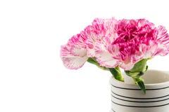 Belle fleur rose dans le vase noir et blanc sur le backgrou blanc Images stock
