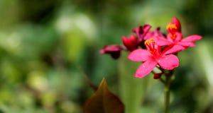Belle fleur rose du jardin Photographie stock