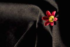 Belle fleur rose enveloppée à l'arrière-plan gris Image libre de droits