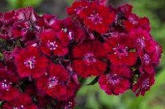 Belle fleur rouge Images stock