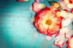 Belle fleur rouge avec des pétales sur le fond de bleu de turquoise avec le bokeh, vue supérieure Image stock