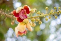 Belle fleur rouge d'orchidée sur l'arbre Photo libre de droits