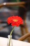Belle fleur rouge dans un vase en verre Photo libre de droits