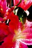 Belle fleur rouge de lis, style d'aquarelle illustration libre de droits