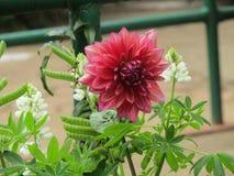 Belle fleur rouge de nature images stock