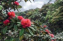 Belle fleur rouge lumineuse à la jungle photographie stock libre de droits