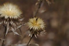 Belle fleur sèche photos libres de droits