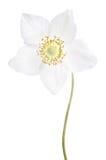 Belle fleur sensible Photographie stock