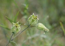 Belle fleur verte Photographie stock libre de droits