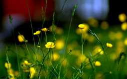 Belle fleur verte et jaune Photos stock