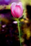 Belle fleur verte et pourpre Images stock