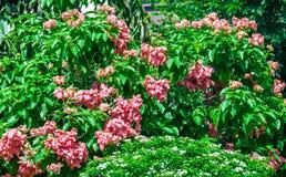 Belle floraison de fleurs Photographie stock libre de droits