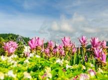 Belle floraison de fleurs Photo libre de droits