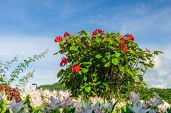 Belle floraison de fleurs Image libre de droits