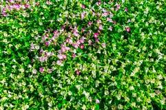 Belle floraison de fleurs Images libres de droits