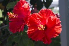 Belle floraison de magnolia photos stock