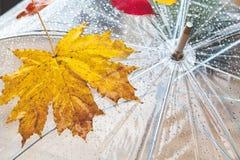 Belle foglia di acero e gocce di pioggia su un ombrello trasparente Immagine Stock Libera da Diritti