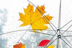 Belle foglia di acero e gocce di pioggia su un ombrello trasparente Fotografia Stock Libera da Diritti