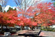 Belle foglie in autunno Immagine Stock Libera da Diritti