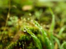 Belle foglie con le gocce di pioggia fotografie stock