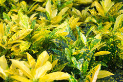Belle foglie del fiore Fotografie Stock Libere da Diritti