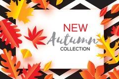 Belle foglie del taglio della carta di autunno dell'oro Ciao autunno Modello dell'aletta di filatoio di settembre Struttura di re Fotografia Stock