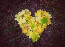 Belle foglie di acero gialle Amore nave Immagini Stock Libere da Diritti