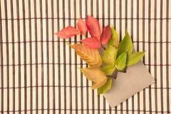 Belle foglie di acero verdi, rosse e gialle di autunno e un envel Fotografie Stock Libere da Diritti