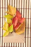 Belle foglie di acero verdi, rosse e gialle di autunno e un envel Immagine Stock