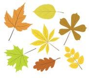 Belle foglie di autunno colourful della raccolta isolate sulla b bianca illustrazione vettoriale