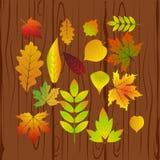 Belle foglie di autunno variopinte della raccolta isolate su fondo bianco Immagini Stock Libere da Diritti