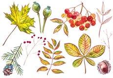 Belle foglie di autunno variopinte della raccolta isolate su fondo bianco Illustrazioni dell'acquerello Fotografia Stock Libera da Diritti