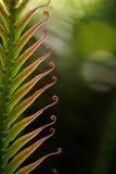 Belle foglie di palma immagine stock libera da diritti