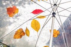 Belle foglie e gocce di pioggia dell'albero su un ombrello trasparente Immagine Stock Libera da Diritti