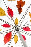 Belle foglie e gocce di pioggia dell'albero su un ombrello trasparente Immagini Stock Libere da Diritti