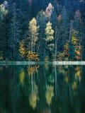 Belle foglie e riflessioni di autunno fotografia stock