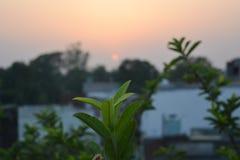 Belle foglie nell'ambito di bello tramonto Fotografie Stock